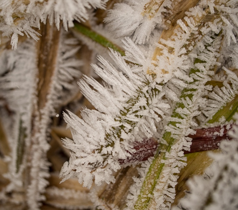 Long frost crystals on grass