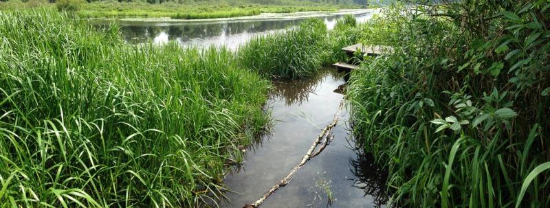 water and reeds at edge of lake