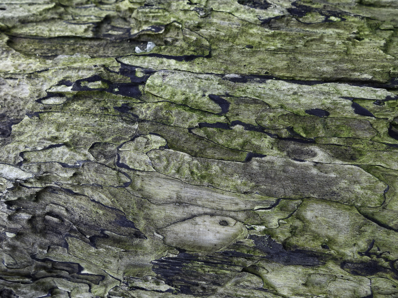 green and grey patterns of driftwood