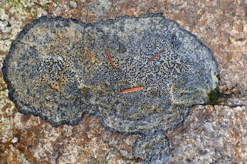 lichen pattern on rock
