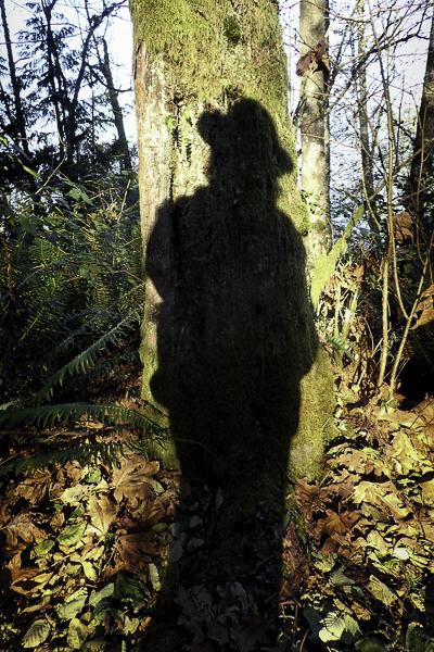 Shadow on trunk of alder tree