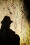 shadow on trunk of Douglas Fir