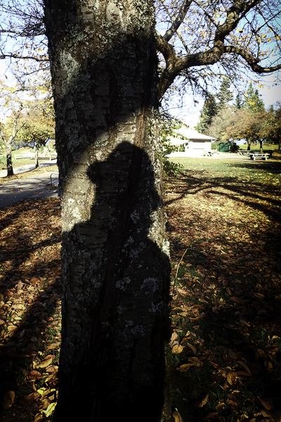 shadow on trunk of cherry tree