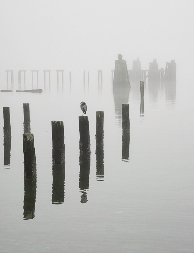 great blue heron sitting on top of one of several pilings on a foggy morning