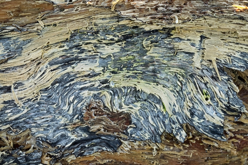 Abstract pattern of greens and greys on beach log