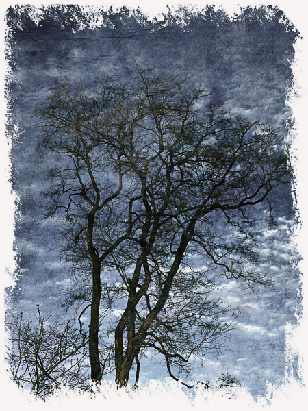 tree against blue sky with clouds