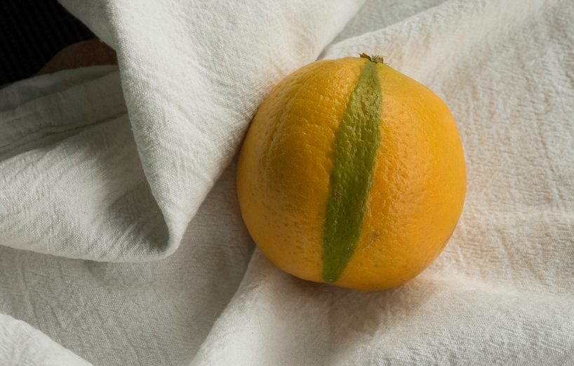 Orange fruit with green segment on its skin