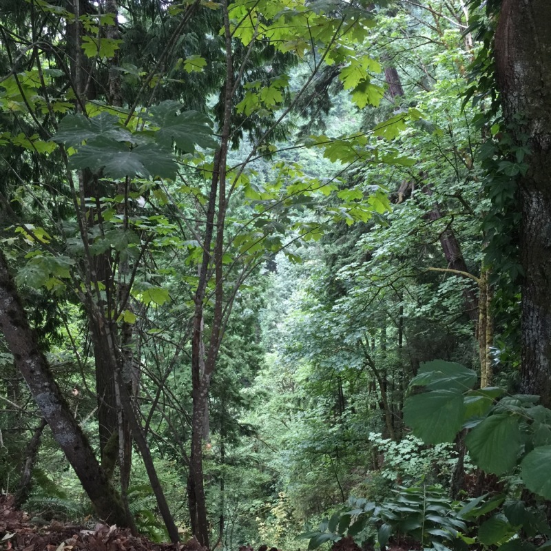 looking down into a narrow valley lined by tall trees