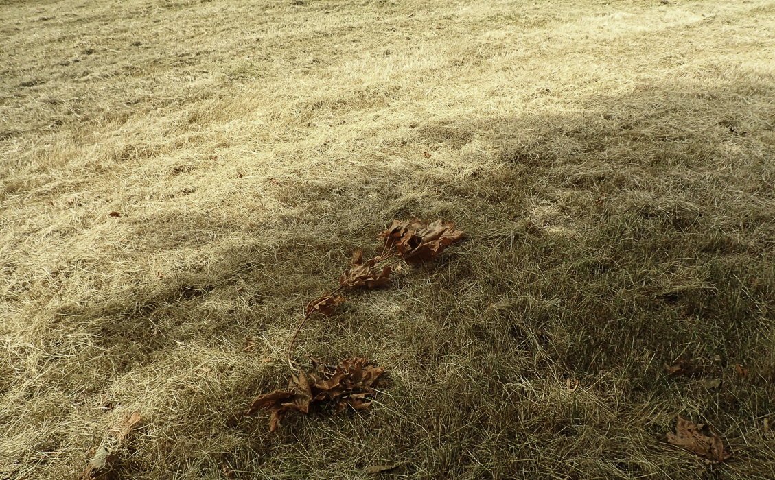 dried lawn with brown dried leaves